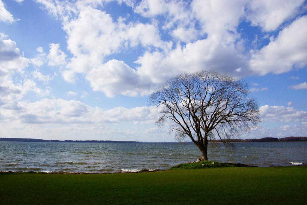 Widok Kisajna z brzegu w Pierkunowie