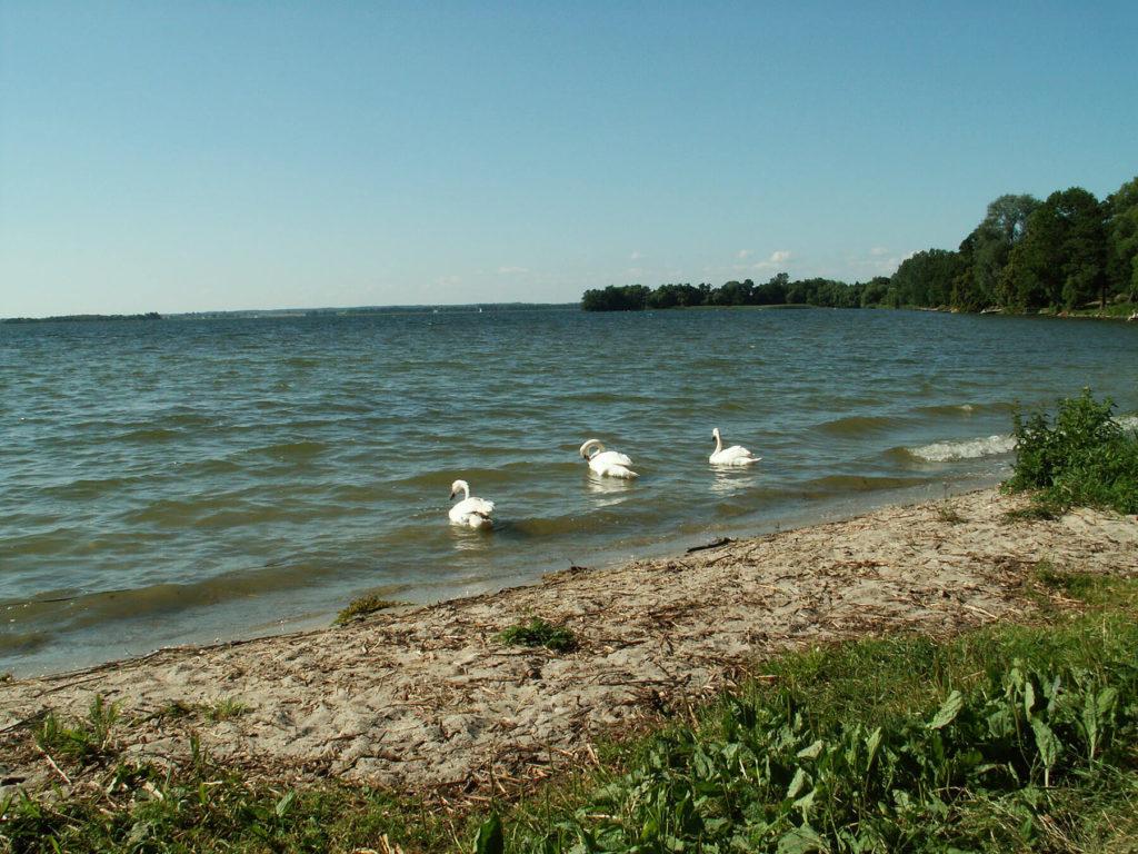 Brzeg Jeziora Dobskiego w Fuledzie