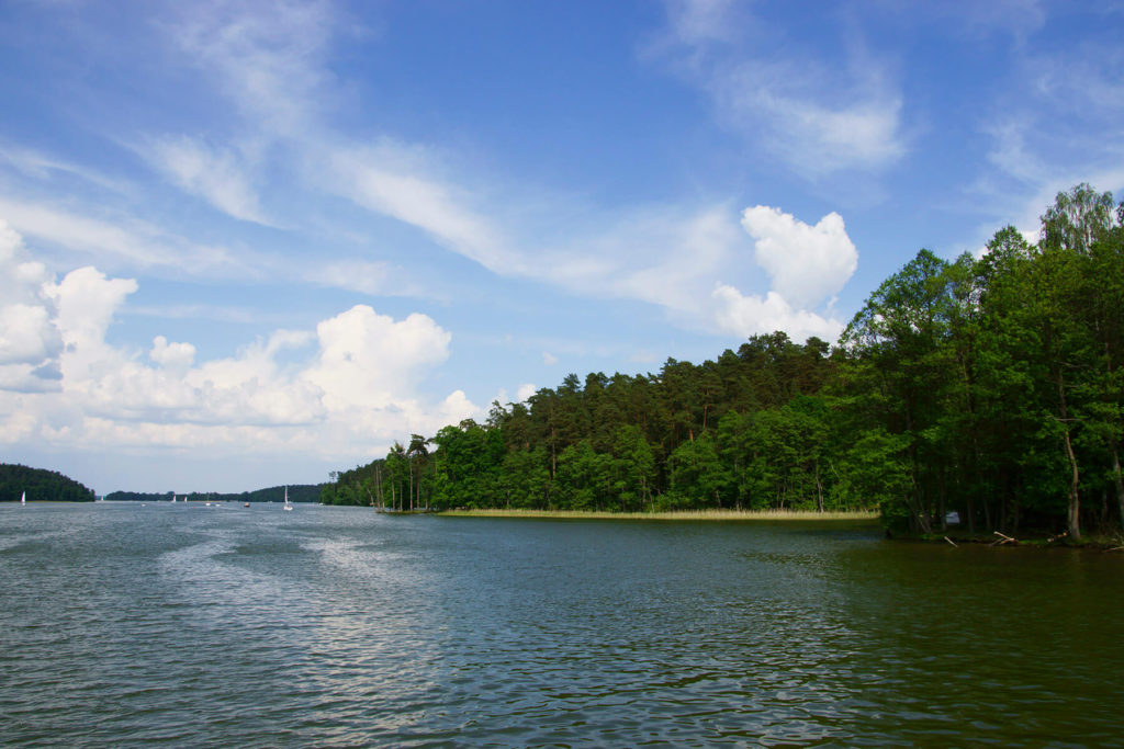 Las na brzegu jeziora
