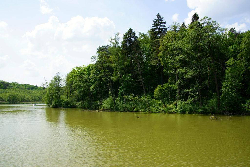 Meandry jeziora Guzianka Wielka